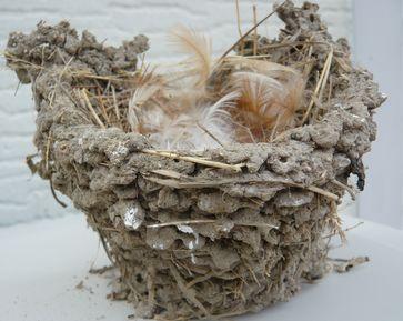 ツバメの巣.jpg
