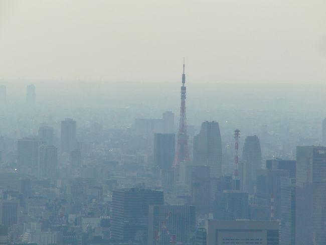 ツリーから見た東京タワー.jpg