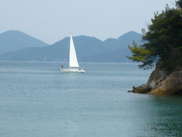 向島のヨット.jpg