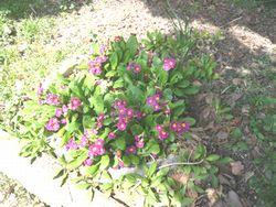 小さな春.jpg