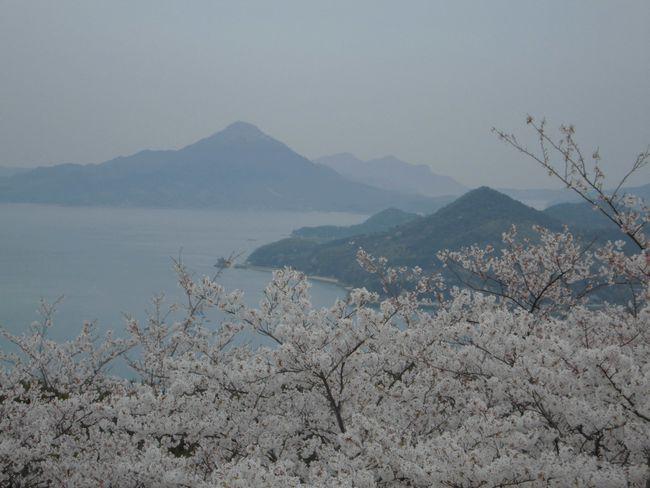 岩城島と桜.jpg