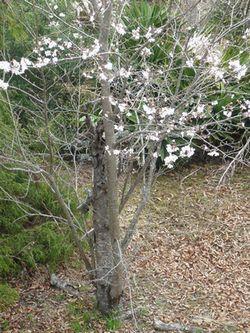 桜の下.JPG