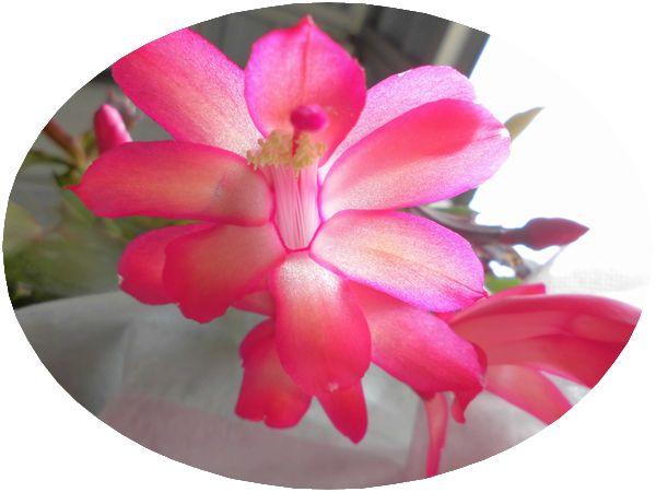 祝い花1.jpg