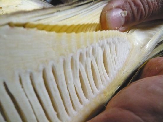 竹の皮の取り方.JPG