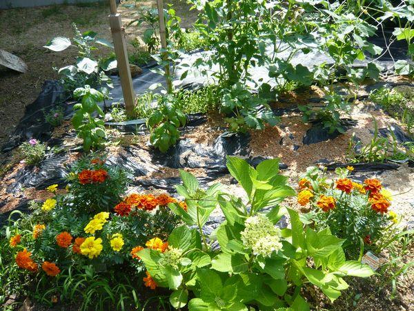 自家菜園6月.jpg
