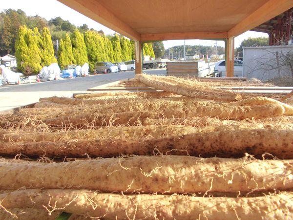自然薯干し風景.jpg