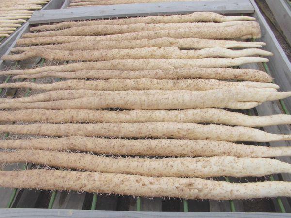 自然薯干し風景2012年12月.jpg
