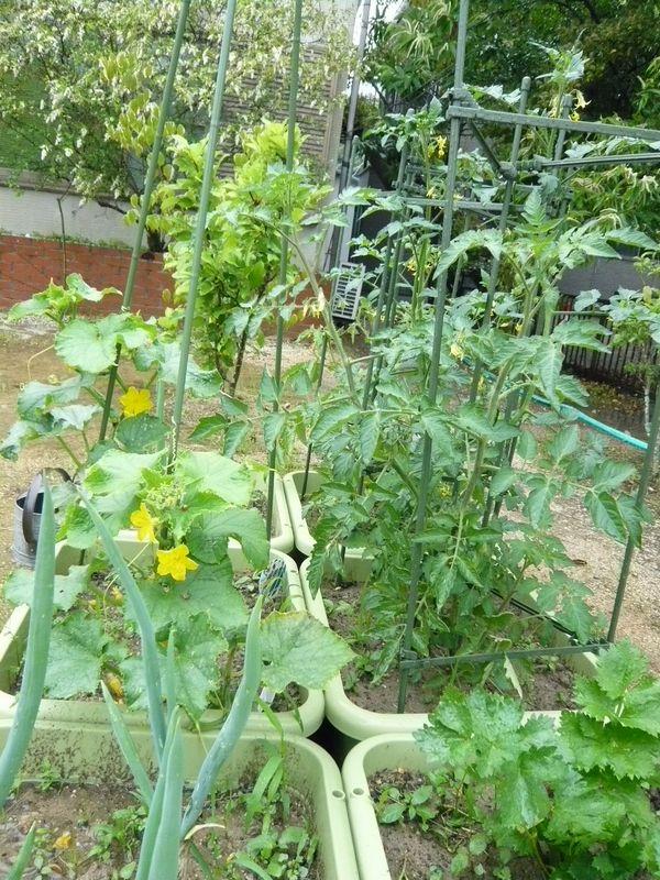 菜園2A.jpg