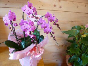 蘭の花.jpg