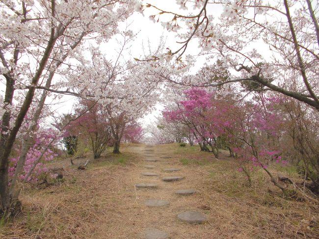 開山桜トンネル.jpg