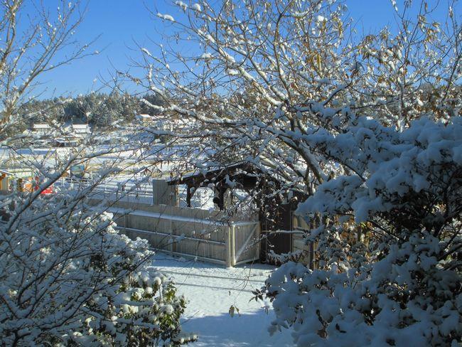 2014年12月18日朝雪景色.jpg