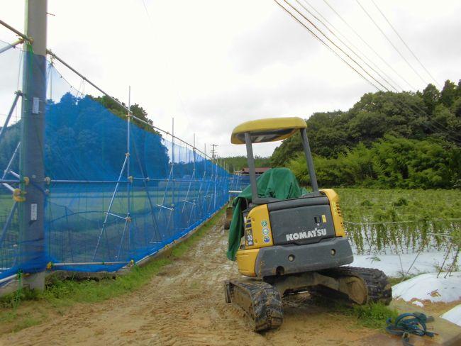 2014年8月9日畑防風ネット.jpg