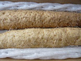 2010自然薯.JPG