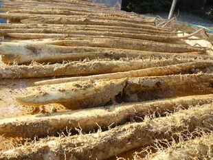2011収穫.jpg