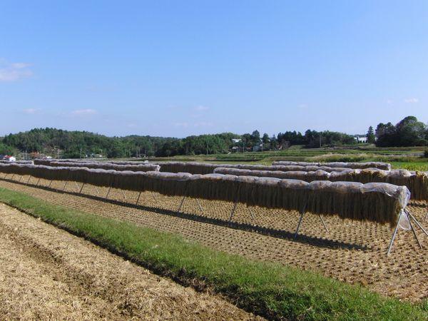 2011秋久井町中野.JPG