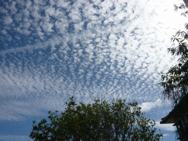 2012うろこ雲1.jpg