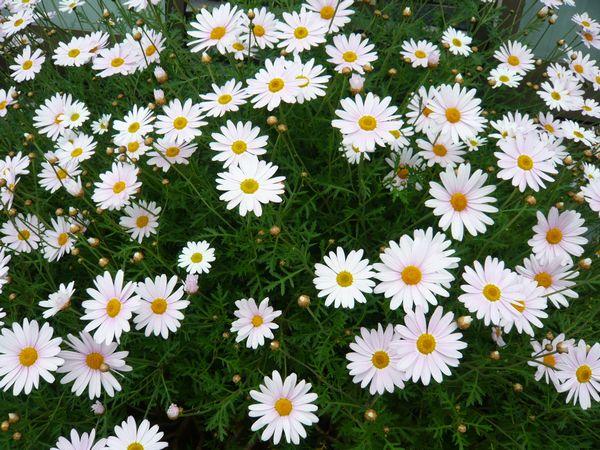 2012初夏の花.JPG