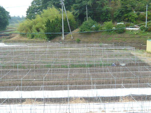 2012年梅雨の畑.jpg