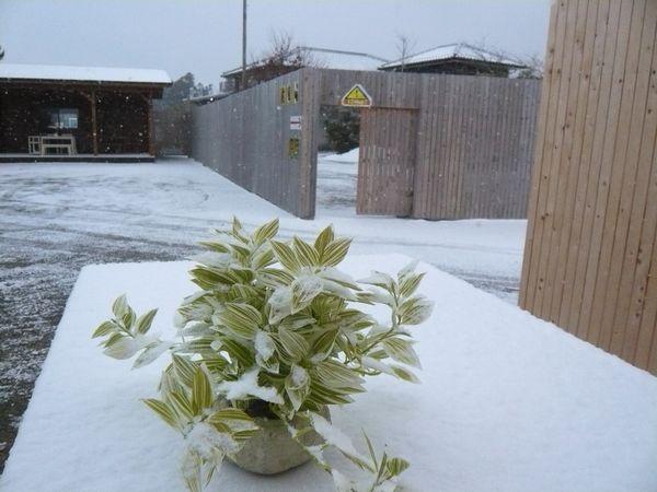 2012年1月雪.jpg