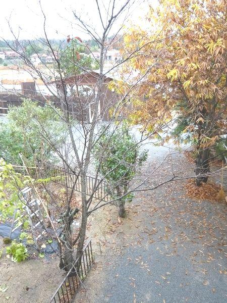 2012年11月26日景色.jpg