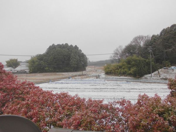 2012年12月28日朝.jpg