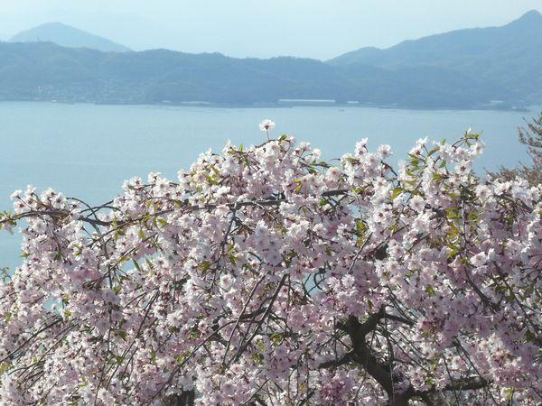 2012春の瀬戸内1.jpg