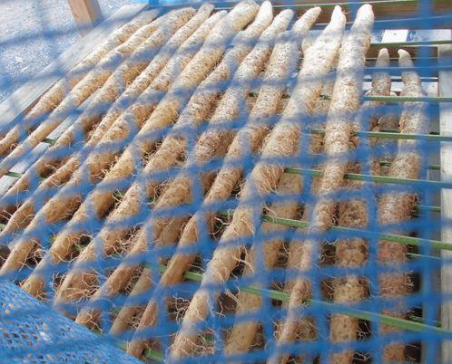 2012自然薯干し.jpg