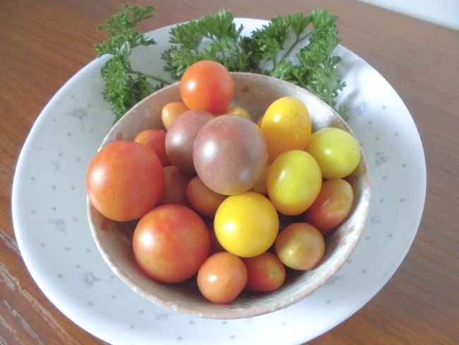 2013ミニトマト色とりどり.jpg