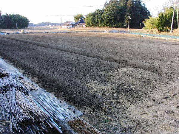 2013収穫後の畑.jpg