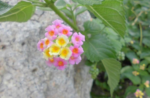 2013夏の花.jpg