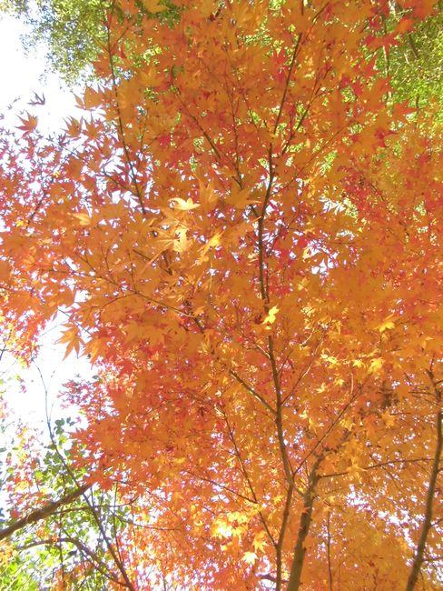 2013岩城の紅葉.jpg