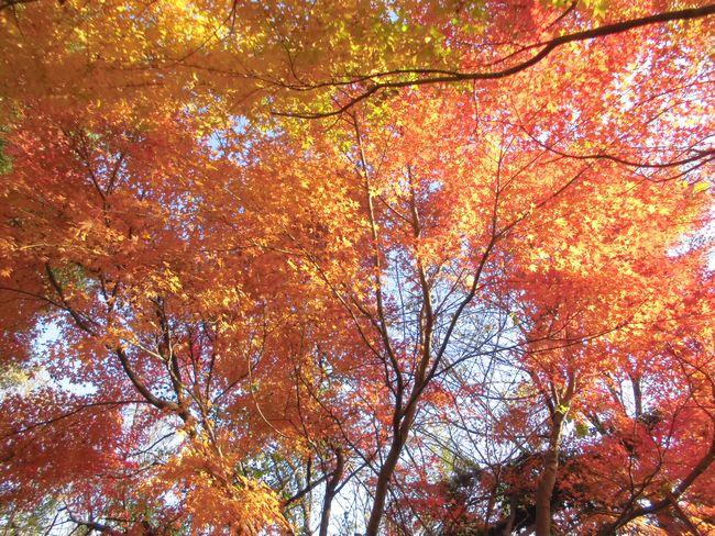 2013岩城の紅葉1.jpg
