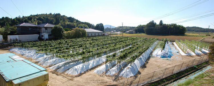 2013年10月1日自然薯畑広角.jpg