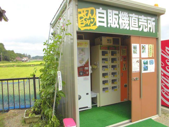 2013年8月26日のグリーンカーテン.jpg