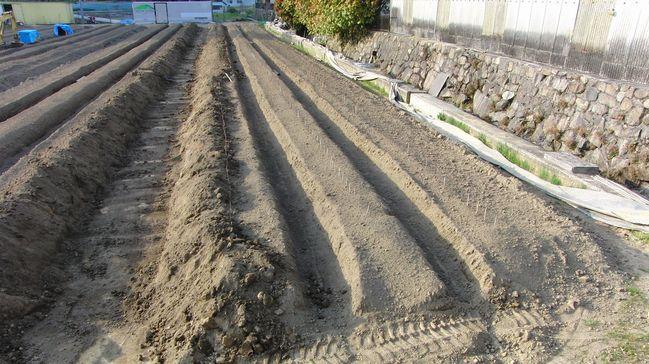2013畑の準備3.jpg