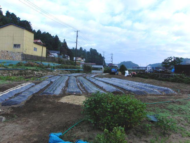 2013秋種まき1.jpg