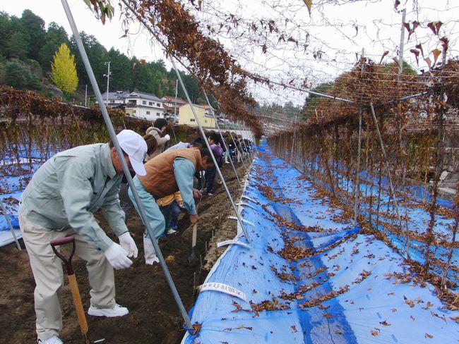 2013自然薯掘り風景.jpg