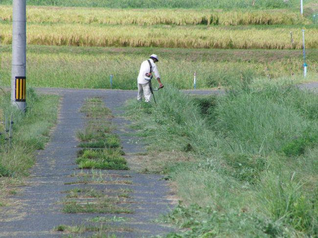 2014地域草刈り缶拾い1.jpg