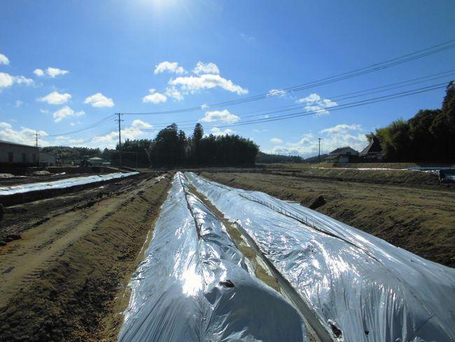 2014年1月15日自然薯畑.jpg