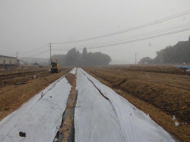 2014年1月18日自然薯畑.jpg