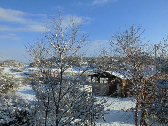 2014年1月19日雪.jpg