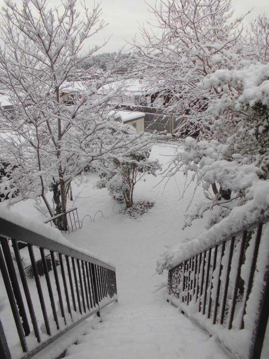 2014年2月18日の雪.jpg