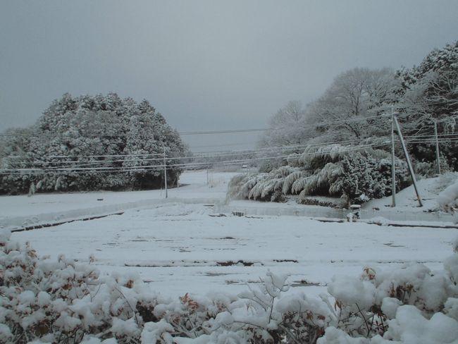 2014年2月18日の雪1.jpg