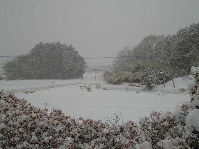 2014年2月8日雪.jpg
