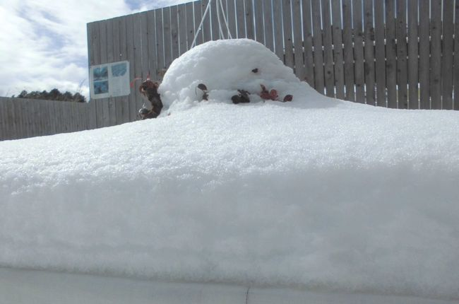2014年2月8日雪4.jpg