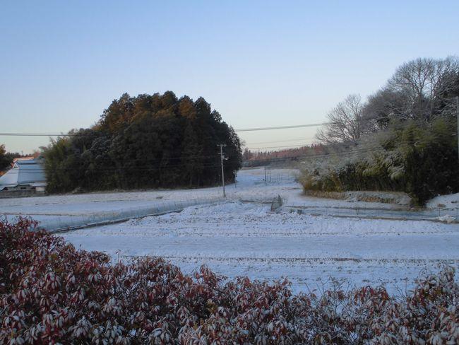 2014年3月10日の雪.jpg