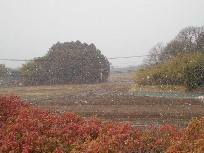 2014年3月6日雪1.jpg