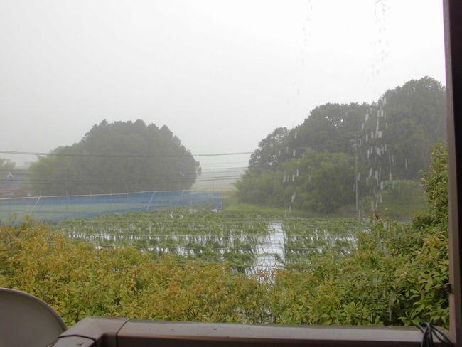 2014年8月27日自然薯畑1.jpg