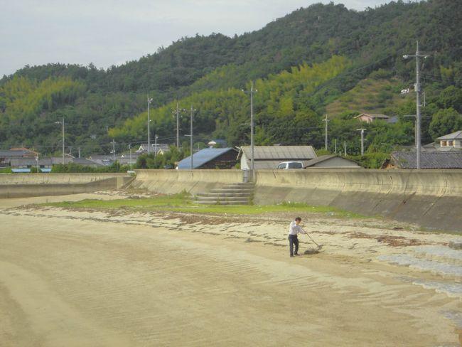 2014年8月28日岩城島でアマモ集め.jpg