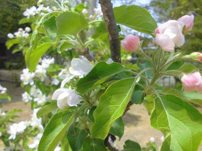 2014庭の花木1.jpg